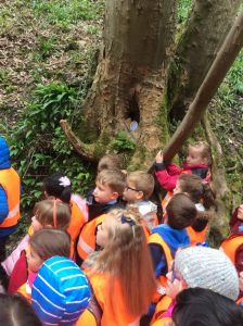 Y1 at Fairy Glen